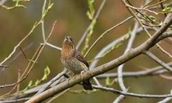 Vycházka za ptáky do Moravských Budějovic