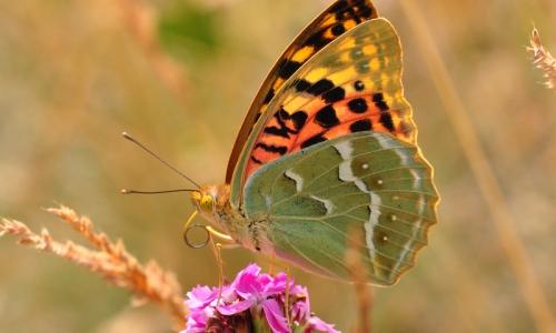 Novinky ze světa motýlů