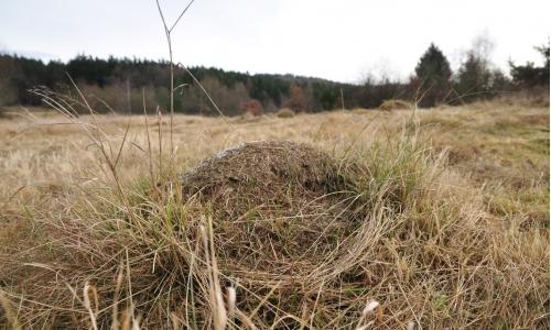 Mravenci, Jemnice - Z okraj bývalého vojenského cvičiště (TR)