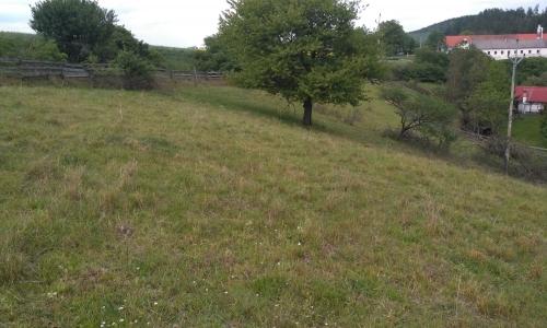 Suché trávníky v údolí Vápovky (JH)